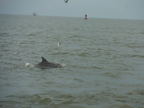 Captain Mike's Dolphin Tours : they were kinda hard to get a good pic of