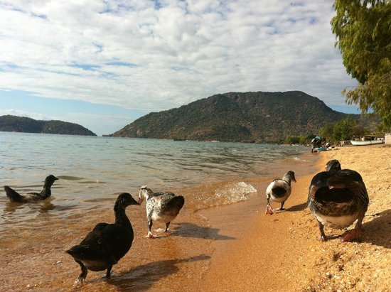 Thumbi View Lodge: Why don't they eat the ducks?