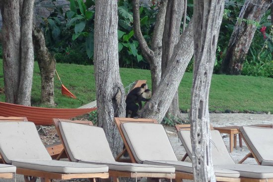 Four Seasons Resort Costa Rica at Peninsula Papagayo: Momma Monkey and Baby