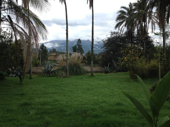 Las Palmeras Inn: Hotel grounds