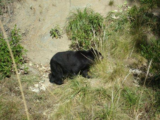 AMARU Bioparque Cuenca Zoologico: Animalitos