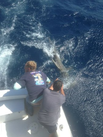 Fish local knowledge fort lauderdale fl beoordelingen for Local knowledge fishing