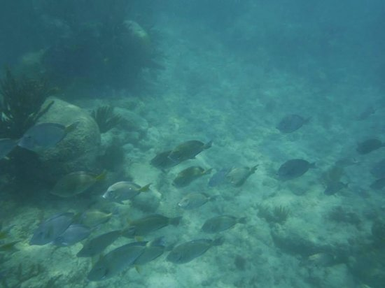 Grand Sirenis Riviera Maya Resort & Spa: fishes in ocean near hotel