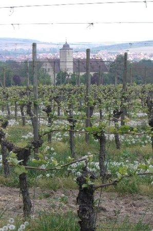 Weinspaziergang Tours