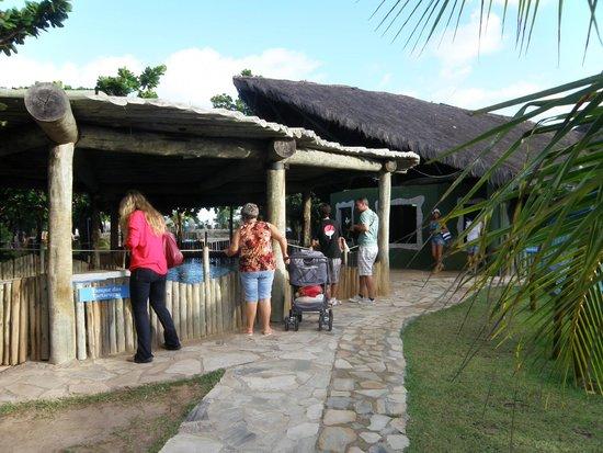 Aracaju Aquarium - Tamar : Tanque das tartarugas
