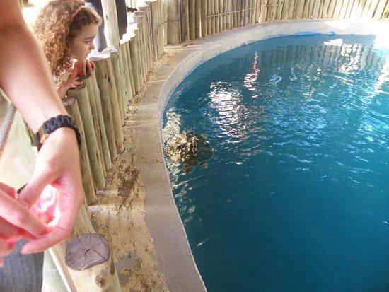 Aracaju Aquarium - Tamar : Tanque