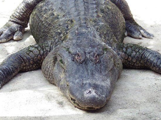 Everglades Safari Park: I see you