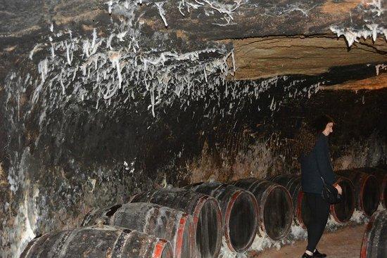 Special Mold In The Wine Cellar In Vivamus Tokaji