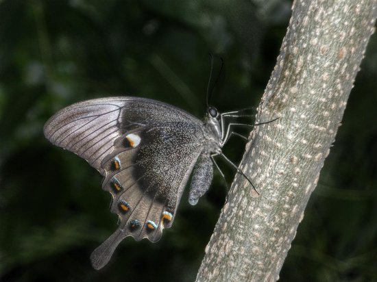 Key West Butterfly and Nature Conservatory: Photo 1