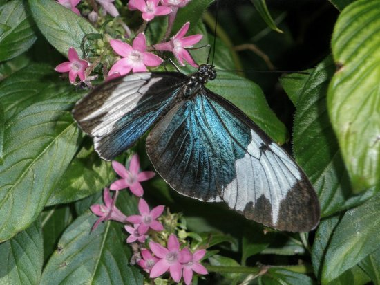 Key West Butterfly and Nature Conservatory: Photo 2