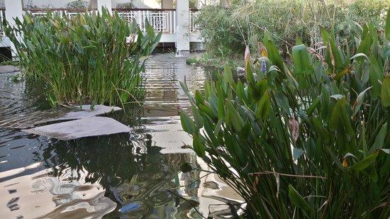 Southern Sun Ridgeway: water  feature around restaurant