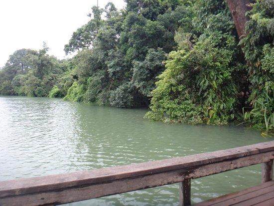 Yeak Laom Volcanic Lake: Le lac est entouré d'arbres d'où l'on peut sauter dans l'eau