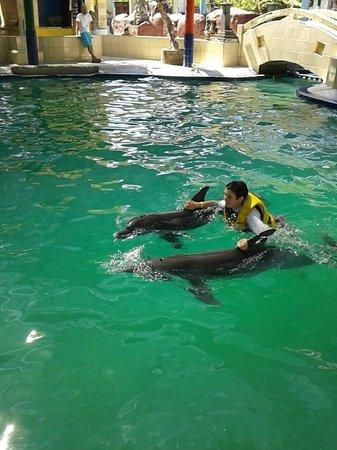Melka Excelsior Resort Hotel: Dolphins!