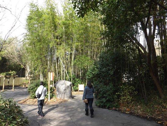 Zoo Atlanta: Andando pelo zoo
