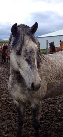 Galsi Horse Rental: Very beautiful horses