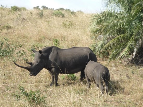 Parc de la zone humide d'iSimangaliso : rhino