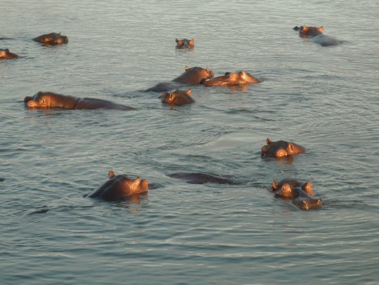 Saint Lucia Estuary : hyppo time