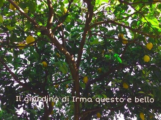 L'Eco dell'800: gracias por el Limonchelo Irma , una delicia y un paisaje unico