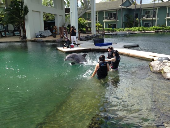 Dolphin Quest : Dancing with the Dolphin