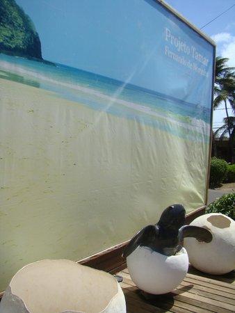 Museu Aberto da Tartaruga Marinha de Fernando de Noronha