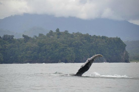 Whale adventure: Humpback Whale pectoral Fin