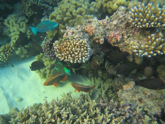Reef Encounter: Reef Snorkel