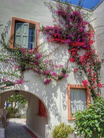Nissia Kamares Hotel Apartments: the beautiful plants