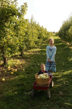 Tuttle Orchards: Rows and rows of apples to pick