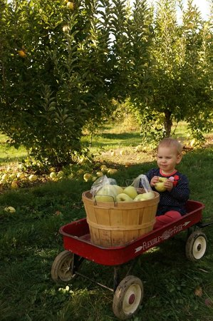 Tuttle Orchards: Tuttle provides a wagon, basket and bag for picking apples