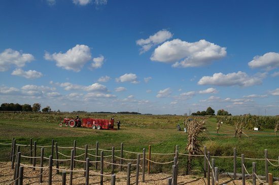 Tuttle Orchards: Hayrides to go pick your own pumpkin!