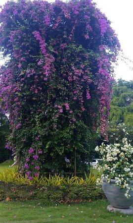 Thavorn Palm Beach Resort: Флора в отеле