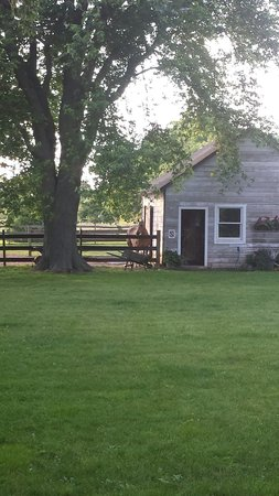 The Farmhouse Bed and Breakfast: One of the family pets