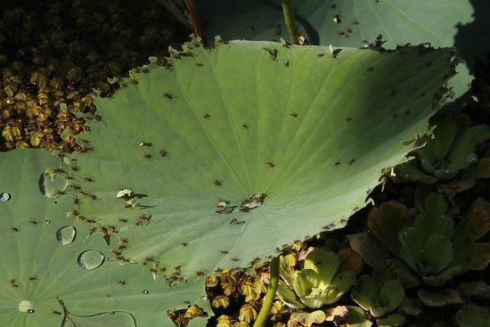 Macaw Lodge: The leaf cutter ants!