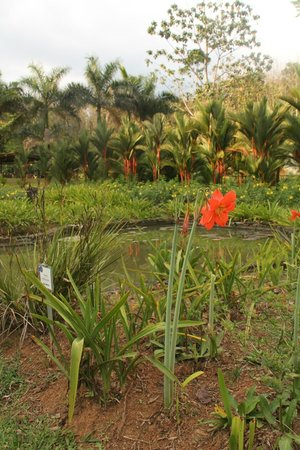 Macaw Lodge: View over water purification ponds in garden