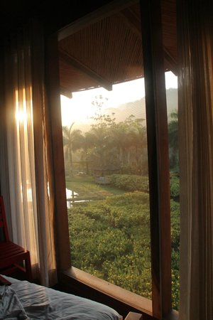 Macaw Lodge: View from bedroom
