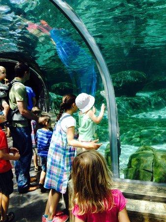 St. Louis Zoo : Sea lions