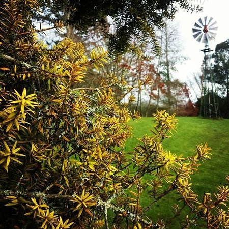 Mokoia Downs Estate B&B: lush grounds
