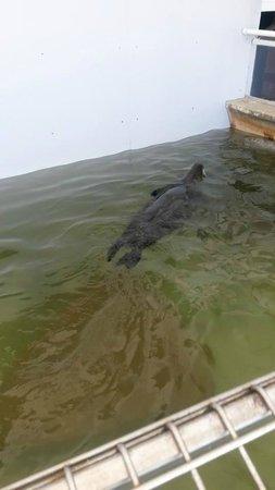 Seaside Aquarium: seal floating around in too-small enclosure