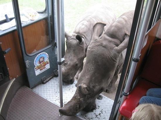 Serengeti-Park Hodenhagen: moeder neushoorn met baby!