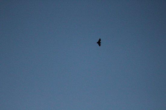 Desert Pearl Inn: Bats at evening
