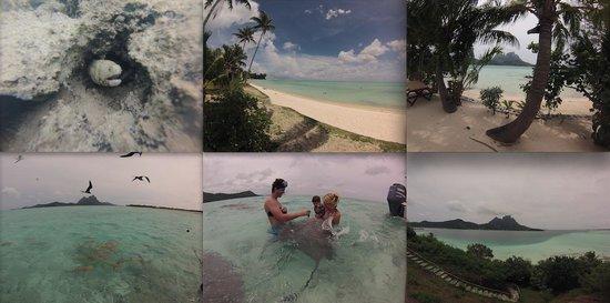 Hotel Matira : Lagon Matira Excurtion Rohivai Tours : Motu Privé, Raie, Requin...