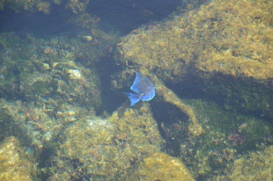 Yal-ku Lagoon: peixe