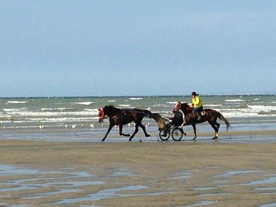 Banc des Oiseaux : Horses on the beach