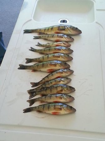 Fort Wilkins State Park: Perch caught in Lake Fanny Hooe