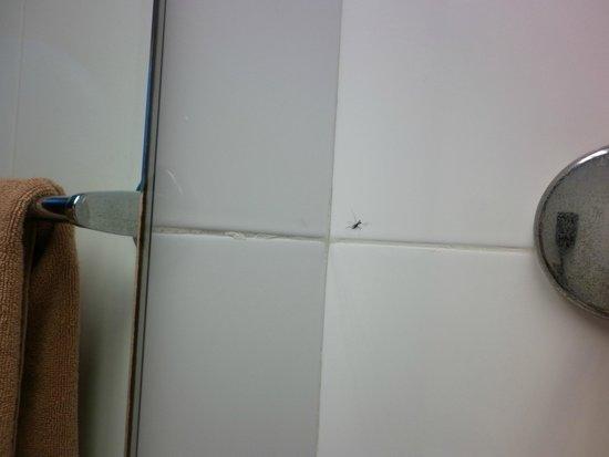 Hotel Riu Naiboa : Moquito muerto