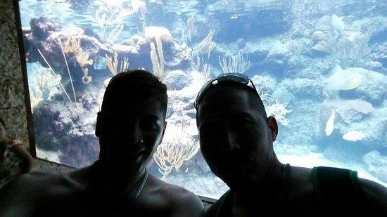 Xcaret Eco Theme Park: En el acuario!!!