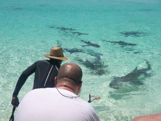 Powerboat Adventures: Shark Bait!