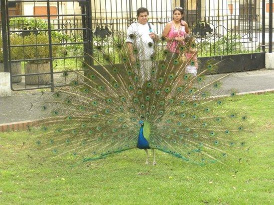Zoo Buenos Aires : encantador