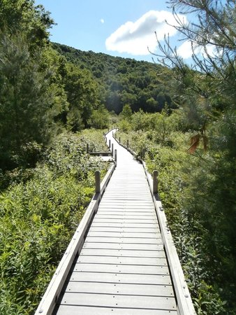Thundering Falls Trail: boardwalk leading to falls
