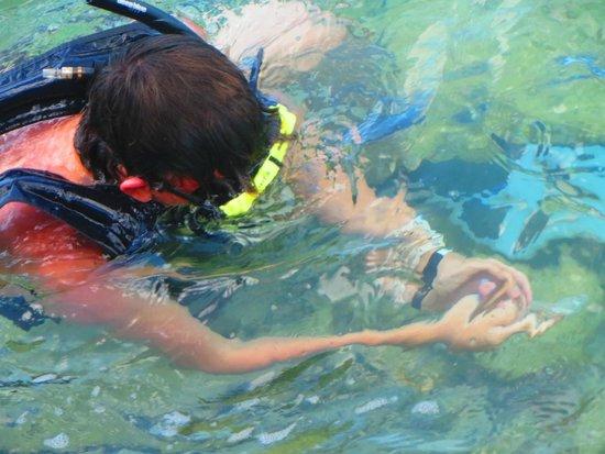 De Palm Island: Snorkeling